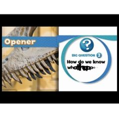 Oxford Discover 4 Big Question DVD Video